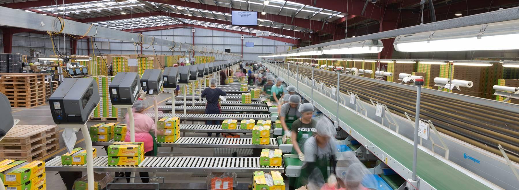 Job Vacancies   Trevelyan's Kiwifruit Jobs